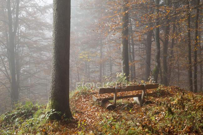 Alemania, Baviera, Alta Baviera, Berchtesgadener Land, Berchtesgaden National Park, Schoenau at Koenigssee, banco en madera otoñal - foto de stock