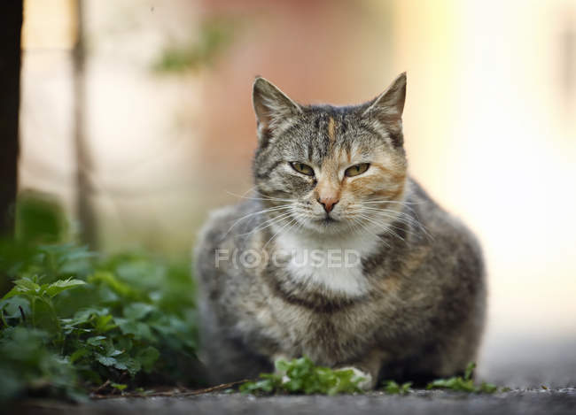 Tabby cat lying at wayside and looking at camera — Stock Photo