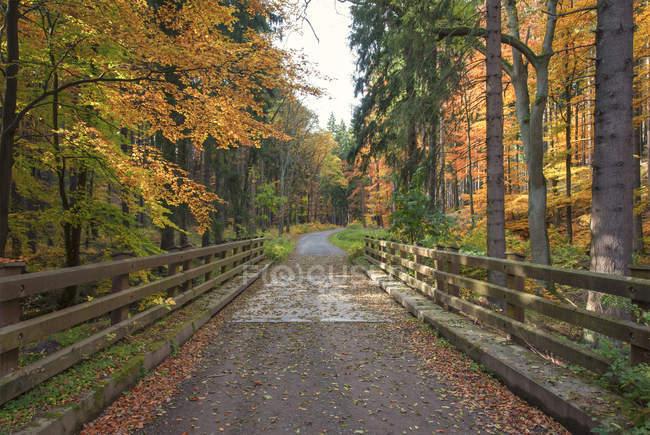 Перегляд регіоні Harz Національний парк в денний час, Саксонія-Ангальт, Німеччина — стокове фото