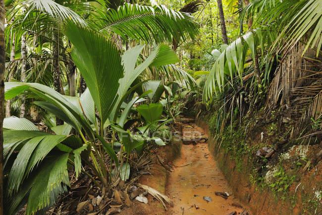 Сейшельские острова Праслин, Vallee de Mai, путь через дождевой лес — стоковое фото