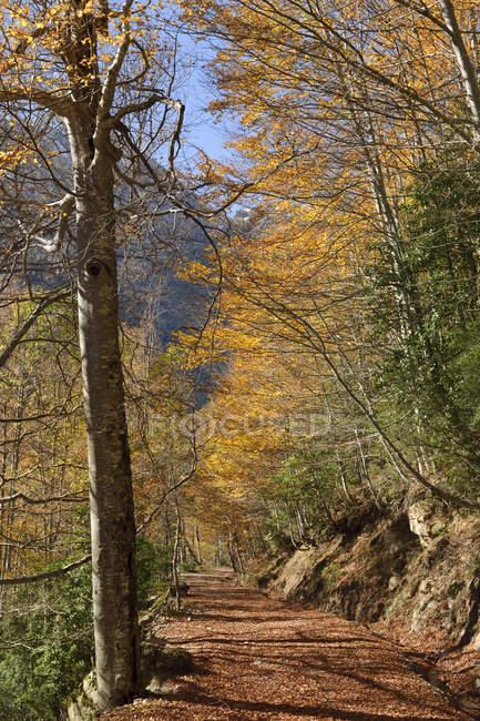 España, Parque Nacional Ordesa y Monte Perdido, Sendero de senderismo en los Llanos de La Larri - foto de stock