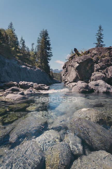 Вид на естественный ручей в дневное время, Британская Колумбия, Канада — стоковое фото