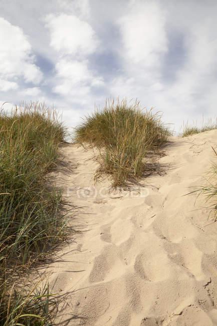 Німеччина, Мекленбурзі-передній Померанії, Рюген, Kreptitzer хіта заповідником, піску, дюни — стокове фото