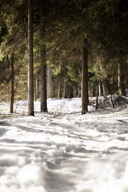 Germania, Baviera, Sentiero innevato a Grosser Arber — Foto stock