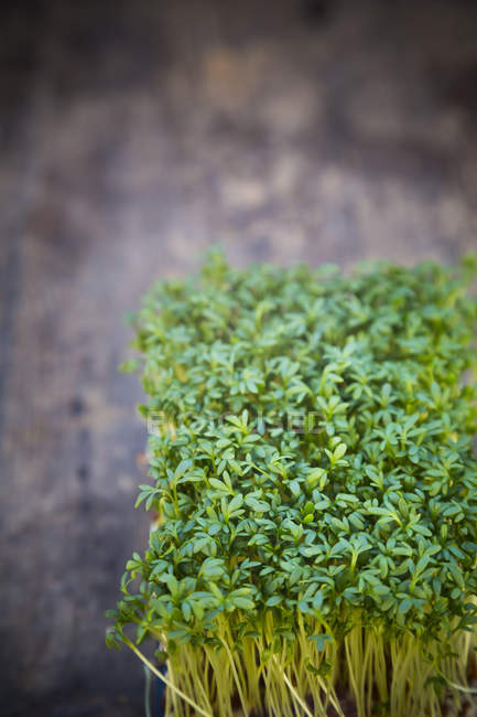 Die Gartenkresse Salat Detailansicht auf Holztisch — Stockfoto