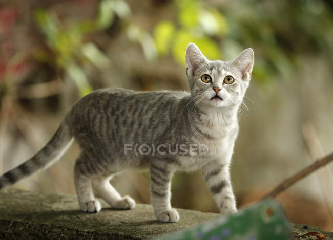 Close-up of cat looking up outdoors — Stock Photo