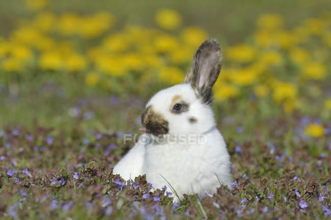 Bebé conejo sentado en el prado de flores - foto de stock