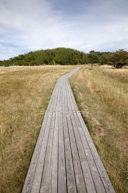 Allemagne, Mecklembourg-Poméranie occidentale, Ruegen, Réserve naturelle Kreptitzer Heide, promenade en bois — Photo de stock
