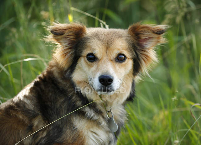 Close-up of mongrel dog sitting in grass — Stock Photo