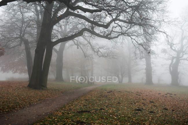 Перегляд дерева в туманний Jenischpark в денний час, Гамбург, Німеччина — стокове фото
