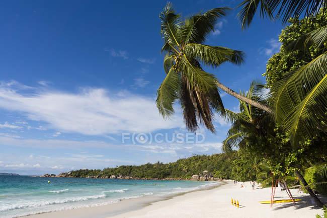 Palma de Seychelles, Praslin, (Cocos nucifera) na praia de Anse Lazio — Fotografia de Stock