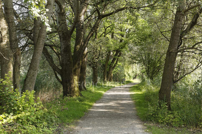 Austria, Vorarlberg, Hard, nature reserve Rhine Delta, bicycle lane — Stock Photo