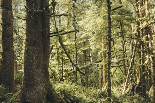 USA, Washington State, View of forest during daytime — Stock Photo