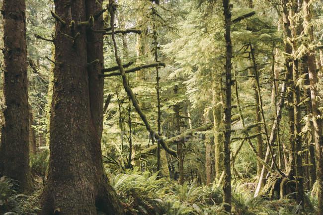 États-Unis, État de Washington, Vue de la forêt pendant la journée — Photo de stock