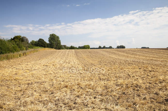 Alemanha, Renânia do Norte-Vestefália, Kamen, campo de restolho durante o dia — Fotografia de Stock