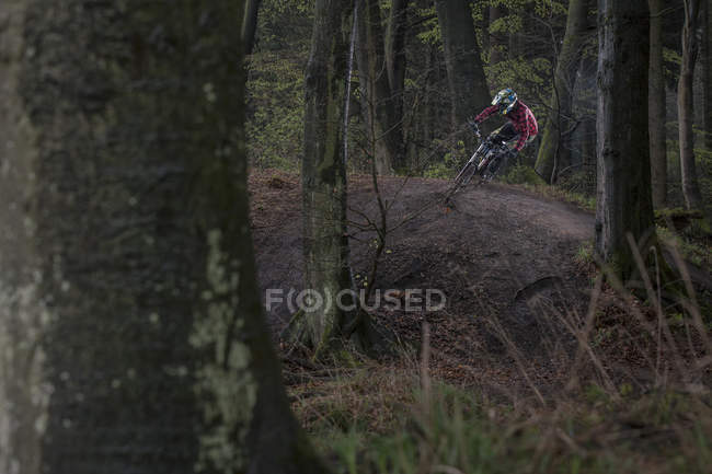 Днем катание на велосипеде в лесу — стоковое фото