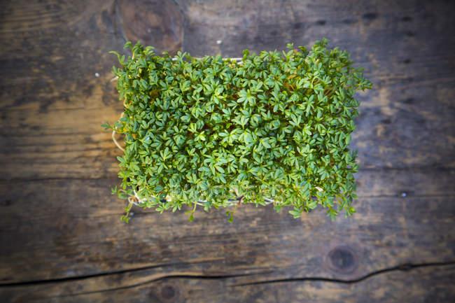 Erhöhten Blick auf die Gartenkresse auf Holztisch, erhöhten Blick — Stockfoto
