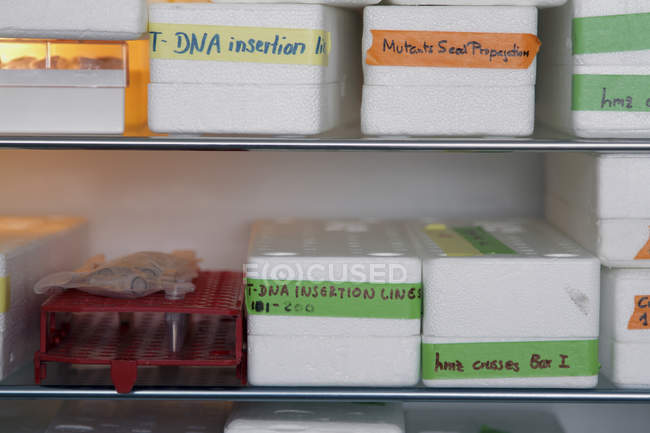 Labware and marked boxes on metal shelves in a biological laboratory — Stock Photo