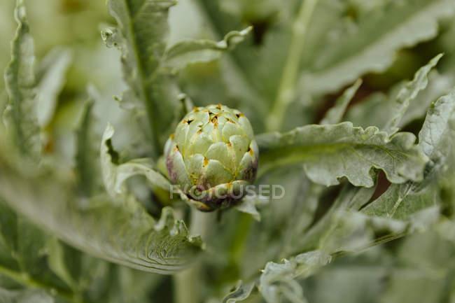 Ansicht Detail einer Pflanze, Makro-Ansicht — Stockfoto