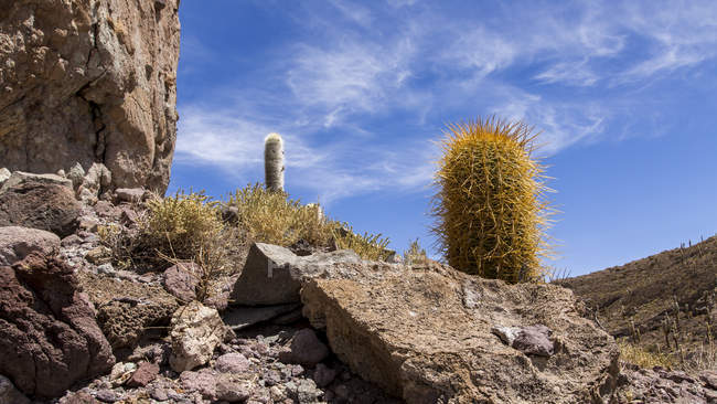 Bolivia, Altiplano, Salar de Uyuni, Cactus and rocks — Stock Photo