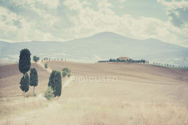 Rolling landscape with road and trees at Sienna, Val d'Orcia, Tuscany, Italy — Stock Photo