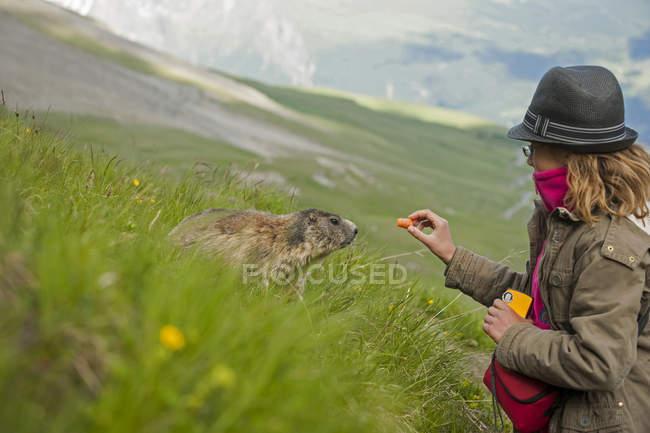 Девочка кормит Альпийский сурок на лугу — стоковое фото