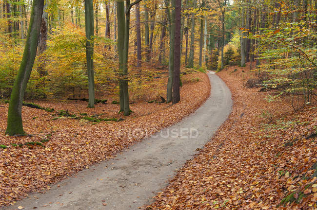 Germany, Mecklenburg-Western Pomerania, forest path in autumn — Stock Photo