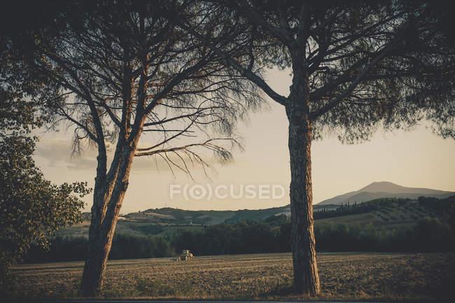 Italia, Toscana, Val d 'Orcia, Paisaje ondulado con árboles - foto de stock