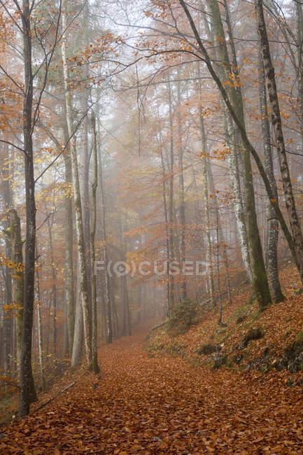 Німеччина, Баварії, верхній Баварії, Berchtesgadener землі, Берхтесгаден Національний парк, Schoenau в Koenigssee, туман в осінній ліс — стокове фото