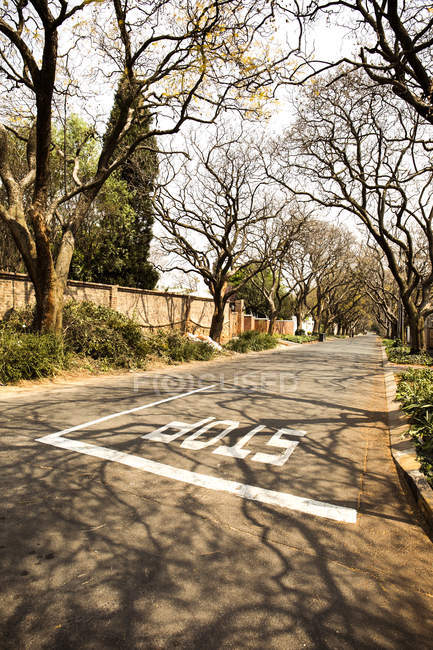 South Africa Johannesburg Street In Parkview District With Bare Trees And Road In Sunshine Weather Day Housing Area Sky Stock P O 181967468
