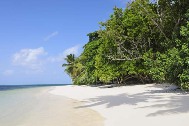 Vista da praia com palmeiras em Praslin, Seychelles — Fotografia de Stock