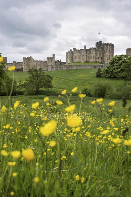 Великобритания, Northumberland, Alnwick, view to Alnwick Castle — стоковое фото