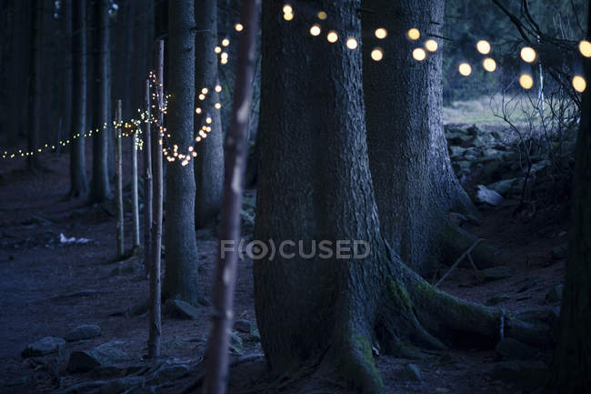 Fairy lights in forest at night — Stock Photo