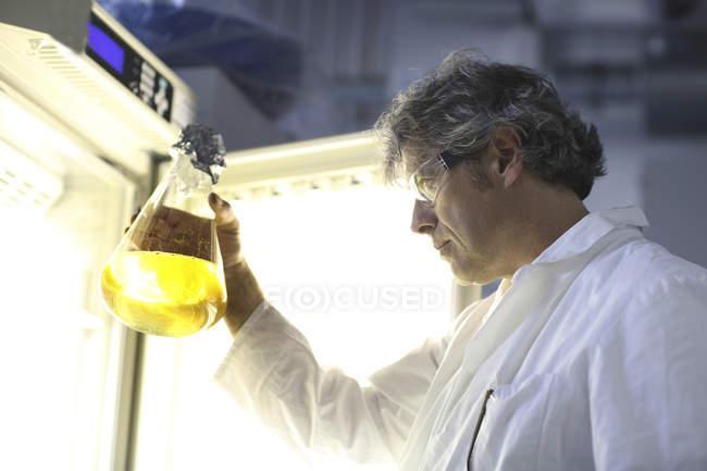 Científico en laboratorio evaluando muestras - foto de stock