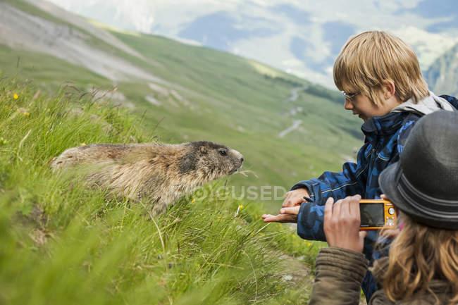 Австрия, Каринтии, Кайзер-Франц-Josefs-достопримечательности, фотографирование девочка и мальчик, кормления Альпийский сурок (marmota marmota) — стоковое фото