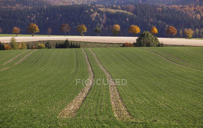 Німеччина, Саксонії, вид на осінній пейзаж з поля — стокове фото
