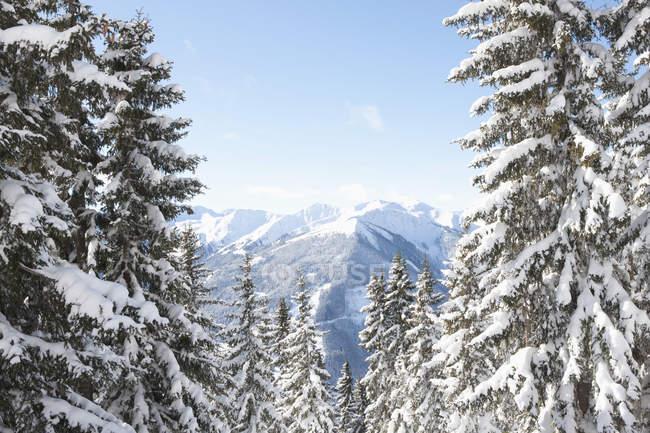 Австрія, Заальбах-Хінтерглемм, Альпи у фоновому режимі денний час — стокове фото