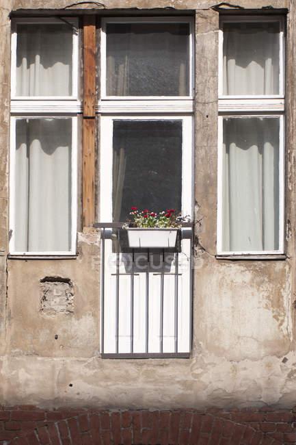 Закри пошарпаний вікно з червоними квітами — стокове фото