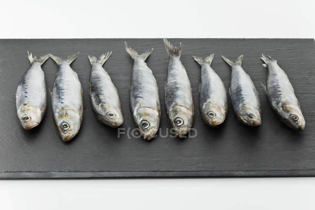 Row of fresh Sardines — Stock Photo