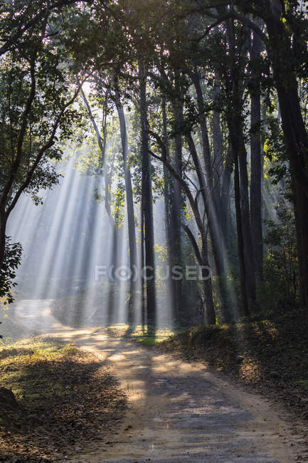 View of forest with shala trees at Jim Corbett National Park, Uttarakhand, India — Stock Photo