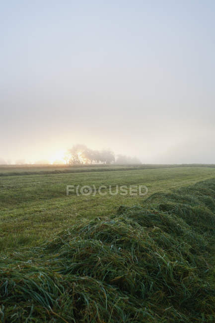 View of mowed field at sunrise, Nennig, Germany — Stock Photo