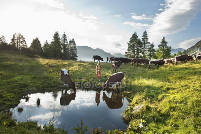 Австрия, Зальцбург Каунти, женщина и мальчик, стоя в альпийский луг с коровами — стоковое фото