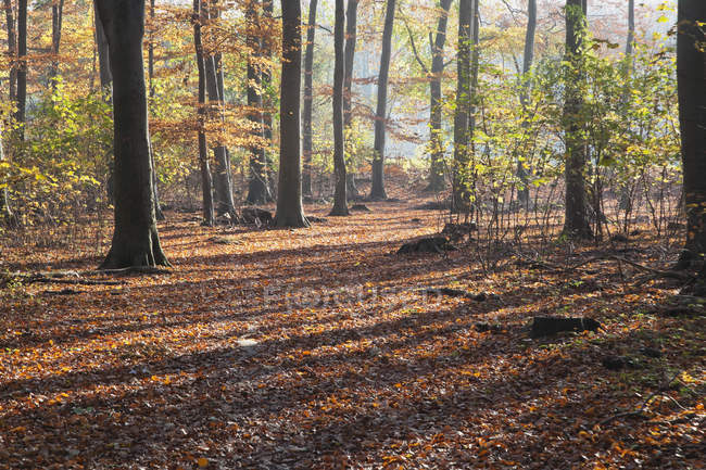 Daytime view of autumnal leaf covering in forest — Stock Photo