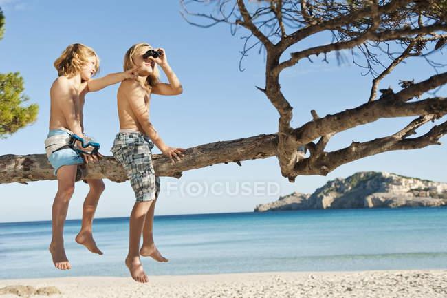 Дети сидят на дерево и с помощью бинокля — стоковое фото