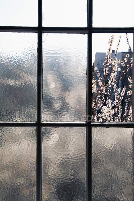 Blühende Äste durch altes Fenster — Stockfoto