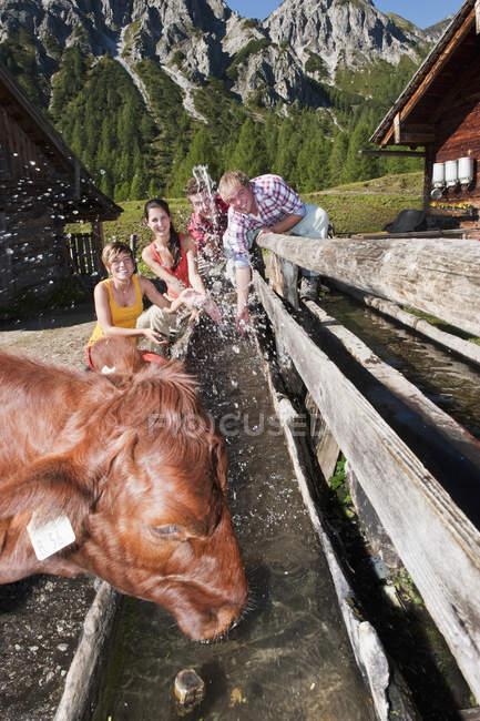 Men and women splashing water at cow — Stock Photo