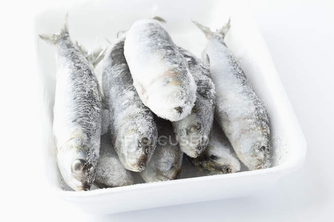 Frozen sardines in plastic dish — Stock Photo