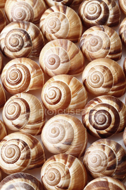 Full frame of spiral snails shells, close up — Stock Photo