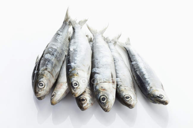 Fresh whole Sardines — Stock Photo