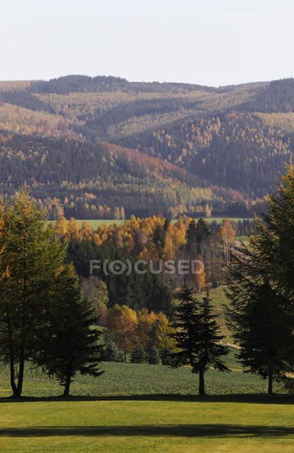 Германия, Саксония, вид ландшафта с осенние деревья — стоковое фото